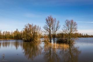 High water in nature reserve Munnikenland