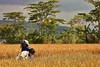 IMG_0487 (Kalina1966) Tags: bali island indonesia people rice field
