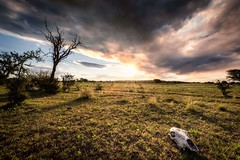 Now that we're dead (Nico Echevarria) Tags: outdoor countryside sunset grass light tree cloudscape