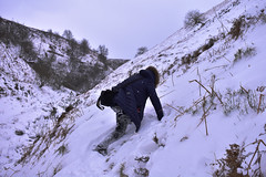 climbing (mkcazackm) Tags: wind windy storm day ogden beast from east snow snowing harsh weather uk russia colder ice breeze nature red robin white black trees