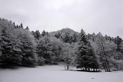 zima Pieniny drzewa 5