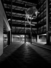 Leopard sculpture -  (Poised).jpg (___INFINITY___) Tags: 2018 6d aberdeen andyscott bw godoxad360 leopard marischalsquare poised animal architect architecture art building canon canon1740f4 darrenwright dazza1040 eos flash infinity light lightpainting night scotland sculpture steel strobist uk