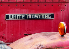 1964 White Mustang Logo (J Wells S) Tags: whitemustang whitetruck rust rusty crusty emblem logo ornament 1964whitemustang flatbedtruck rinbrandwelldrillingco white vintagetruck historictruck antiquetruck atca antiquetruckclubofamerica macungietruckshow macungie pennsylvania macungiememorialpark truck camiones lorry