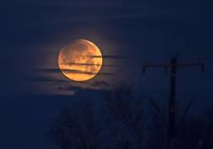 Super Blue Blood Moon... (w3inc / Bill) Tags: w3inc nikon d610 500mm moon blue blood superbluebloodmoon