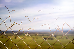 Break Free II (Modifeye) Tags: breakfree inspiration future explore travel birds fly away surrealism manipulation photoshop canon 5dsr canada bokeh inspire quotes fence conceptual photography photomanipulation