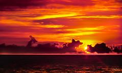 Hawaii-LonePalm-11.jpg (Chris Finch Photography) Tags: shoreline sunset kohala volcano chrisfinchphotography blacksandbeach ʻanaehoʻomalubay goldcoast landcapes landscape waikoloa sunsets pacificocean abay hawaiianphotography hawaii kohalacoast kiholobay landscapephotographs hawaiiphotography keawaikibay landscapephotographer beach ocean utahphotographer wwwchrisfinchphotographycom chrisfinch volcanoes shore lonepalm lone landscapephotography coast pacific bigisland