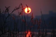 Silent moments (Elbmaedchen) Tags: sonnenuntergang sonne gegenlicht alster hamburg sundown sunlight