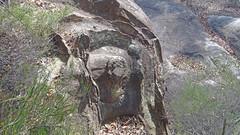 Liesegang rings_1 (Tony Markham) Tags: liesegangring liesegangrings walk spectacular flatrock royalnationalpark trek stunning rockformation rockformations rock sandstone cave overhang nationalpark nasho amazing climb