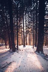 Into the Deep Woods [main picture 2/6] (gabormatesz) Tags: rožňava košickýkraj slovakia sk intothedeepwoods mountain hill snow ridge canon 80d photography winter wintermadness crazytrip tree forest woods sunset nature wood mountainside
