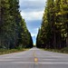 A Long Road Ahead with Lodgepole Forest All Around (Banff National Park)