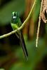 COL_9246 (lucvanderbiest) Tags: empressbrilliant keizerinbriljantkolibrie 15cm zogoedalsendemisch colombia lostangeros