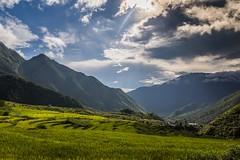 Rýžové zátiší (zcesty) Tags: vietnam25 rýže pole mraky krajina hory hora vietnam hdr dosvěta sơnbình laichâu vn