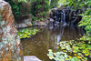 Hobart  Botanical Gardens (RodShot) Tags: water waterfall garden landscape hobart tasmania