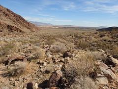 P1270571 (Dr. Fieldgood) Tags: anza borrego california camping amber larry amy desert