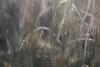 Wiese in Unschärfe (LENS.ART Photographie) Tags: wabisabi d7200 nikon nah natur macro grashalm unscharf gegenlicht norddeutschland