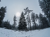 Foggy Sun I (KalleKrabowsky) Tags: winter forrest taunus hohe wurzel