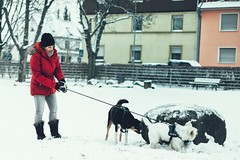 Lady in red... (hobbit68) Tags: dogs hund hunde rot jacke gassi stone stein westhighlandterrier wessi house haus snow schnee winter wintereinbruch