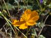 DSC05375 (familiapratta) Tags: sony dschx100v hx100v iso100 natureza flor flores nature flower flowers