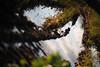 Reflections IV (Ir3nicus) Tags: 85mm14g ausen feld spiegelung spuren wasser outdoor afsnikkor85mm114g germany deutschland niederrhein sunny nikon d700 dslr fullframe fx field reflection tracks water