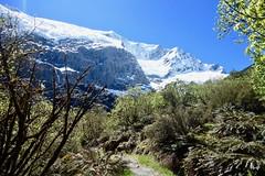 (Annemarie de Villiers) Tags: glacier robroyglacier robroy mtaspiringnationalpark mtaspiring hike hiker nature scenery landscape avalanche river forest snow ice ferns