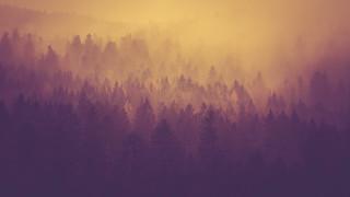 Tree Tops - 21/365