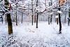White landscape (Dumby) Tags: landscape ilfov românia vaduanei brănești iarnă winter lx3 panasonic pădure