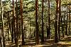 CAMINANDO POR EL  MONTE ABANTOS (bacasr) Tags: hicking mount monteabantos caminando nature logs monte pinetrees trees forest troncos naturaleza pinos elescorial árboles bosque madrid