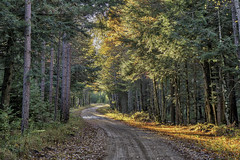 Getting lost on the backroads. (Clint Everett) Tags: nature landscape road country rural fall autumn foliage hiawatha nationalforest michigan upperpeninsula woods forest
