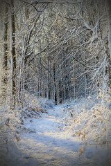 Snowy morning..... (Kevin Povenz Thanks for all the views and comments) Tags: 2015 november kevinpovenz westmichigan michigan ottawa ottawacounty ottawacountyparks grandravinesnorth snow cold trees forest trail path woods early earlymorning winter weather shadow