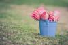 garden stories today (Ayeshadows) Tags: roses bunch bucket garden stories