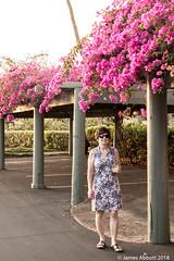 1 29 Poipu Beach 2018-01-29 031-LR (jamesabbott1963) Tags: canon70d kauaipoipu koloa hawaii unitedstates us