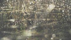 PB_012618_34 (losing.today) Tags: brianyoung oregon pacificnorthwest portland pdx portlandoregon portlandor winter nature outdoors naturepark plantlife plants moodyseason darkseason losingtoday grass grassstudies