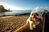 Boris, o cão baiano (carol garcia) Tags: borisocaobaiano boris pets salvador cidadebaixa carolgarcia euamobicho pontadohumaitá