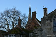 Spire Among the Roof Tops (Little Hand Images) Tags: salisburycathedral rooftops trees bluesky spire steeple cross