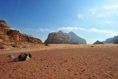 Wadi Rum Desert, Jordan 2 (179) (tango-) Tags: giordania jordan middleeast mediooriente الأردن jordanien 約旦 ヨルダン wadirum desert
