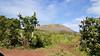 20171205_130545 (taver) Tags: chile rapanui easterisland isladepasqua summer samsunggalaxys6 dec2017 05122017 punapau quary