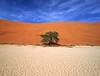 Namibia Landscapes - 07 (Sergey V.Kozlov) Tags: africa namibia etosha deadvlei sonya900