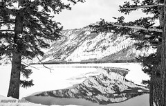 Between Two Trees (maureen.elliott) Tags: blackandwhitephoto blackandwhite yellowstonepark winterlandscape landscape wyoming trees water reflection river nature mountains