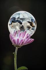 Meine kleine Welt (SonjaS.) Tags: frozenbubble gefroreneseifenblase winter kalt spiegelung reflektionen eiskristalle makro100mm canoneos6d sonjasayer
