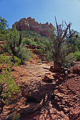 Margs Draw Trail - Sedona, AZ (SomePhotosTakenByMe) Tags: redrock baum tree berg mountain urlaub vacation holiday usa america amerika unitedstates arizona sedona outdoor margsdraw trail hike wanderung nature natur landschaft landscape