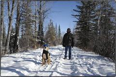 L1000914 (geelog) Tags: summilux28mmf17 leicaq blue goggles dog snow cold winter calgary ab canada