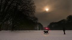 Winter Bubbles (Renate Bomm) Tags: 7dwf bubbles dog fauna postproceced postprocessing renatebomm sliderssunday soapbubbles sol sonne sonyilce6000 walking winter sigma16mmf14dcdn hund natur