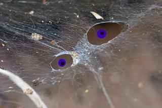 Eye see a web!
