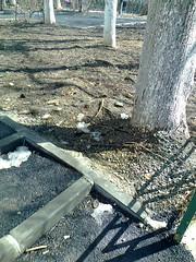 Fotografie64129 (chicore2011) Tags: trees limetree roots littlepark