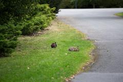 Cemetery Bunnies-1 (Perzec) Tags: norrabegravningsplatsen kyrkogård cemetery solna stockholm bunny rabbit kanin bunnies rabbits