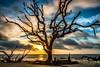 TO THE BEACH (The Suss-Man (Mike)) Tags: atlanticocean beach driftwoodbeachdriftwood georgia glynncounty jekyllisland nature ocean sky sonyilca77m2 sunrise sussmanimaging thesussman water