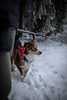 HM2A7611 (ax.stoll) Tags: feldberg frankfurt taunus mountain forest snow winter winterwonderland outdoor nature dog hovawart trees street wanderlust travel
