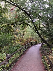 #MuirWoods #NationalMonument 2016 (Σταύρος) Tags: muirwoods nationalmonument nationalpark outofdoors outdoors inthewoods millvalley marin sequoiasempervirens rainyday wet redwoods hiking quality time qualitytime trees woods path youarehere forrest forest flora fauna bushes shurbs leaves windy cold hike climb