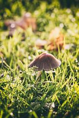 _sunbathing (Joana Rieck) Tags: sun sunset sunlight mushroom pilz fungus grass 50mm canon nature natural outdoor fields forest woods autumn fall 600d