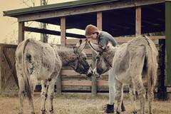Samson, Caroline, and Rainbow (Anna Peterson) Tags: flickrfriday threesacrowd pentax pentaxk3 donkeys pentaxfa43f19ltd 52in2018challenge 52in2018week37three horserescue